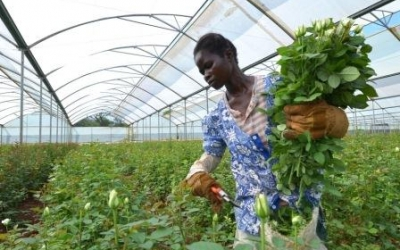 ADP__Africa-Greenhouse